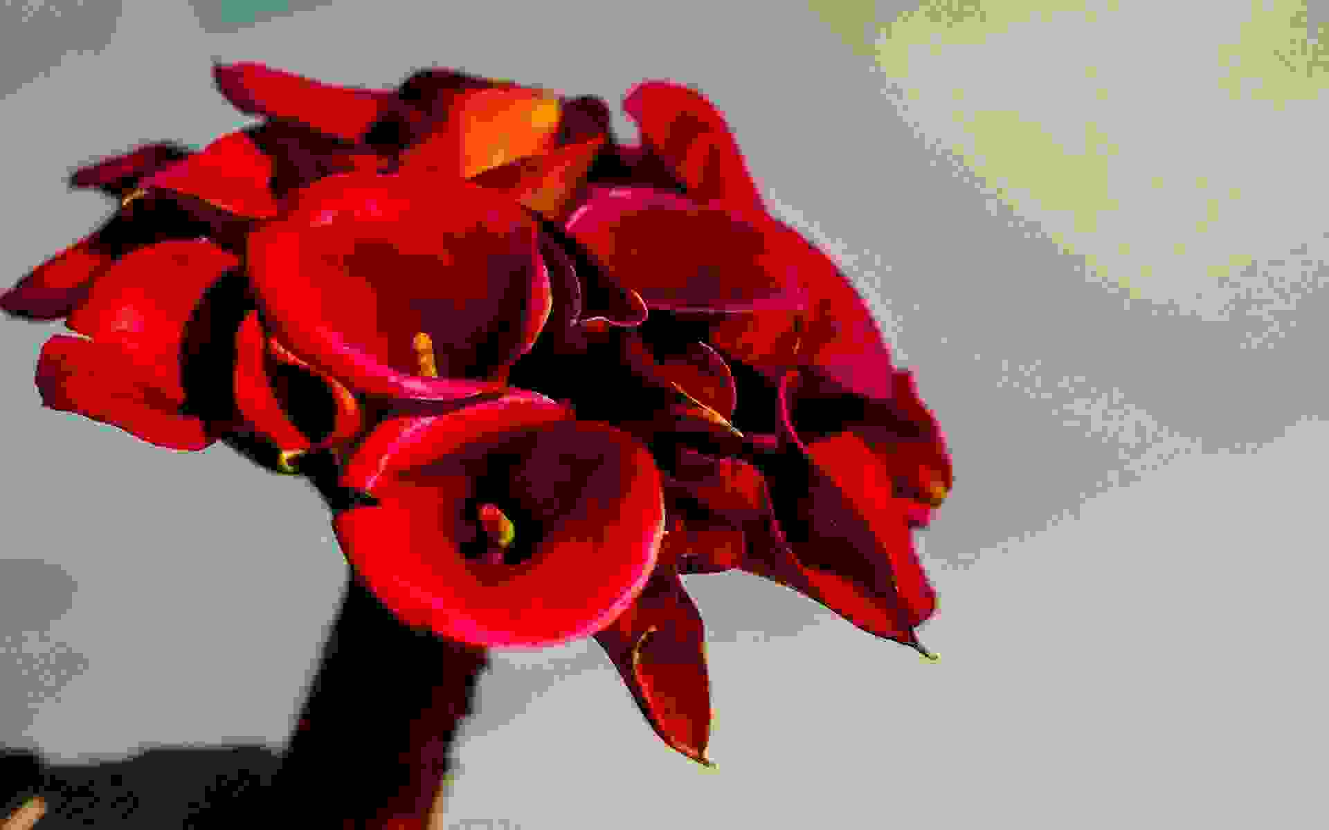 Vibrant-Red-Calla-Lilies-by-Diamond-Events-Wedding-Event-planning-services