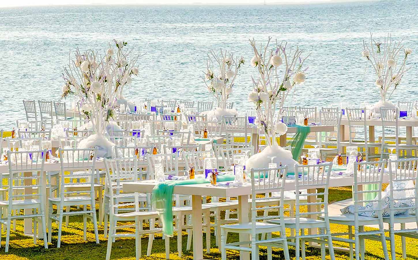 sea-side-wedding-decoration-with-white-trees-and-tiffany-chairs,-diamond-events
